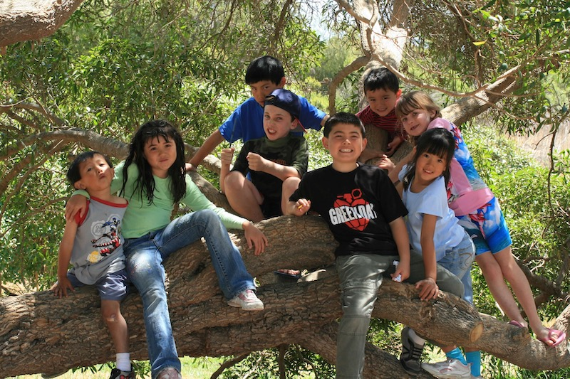 Eight children posing for a group picture in a tree