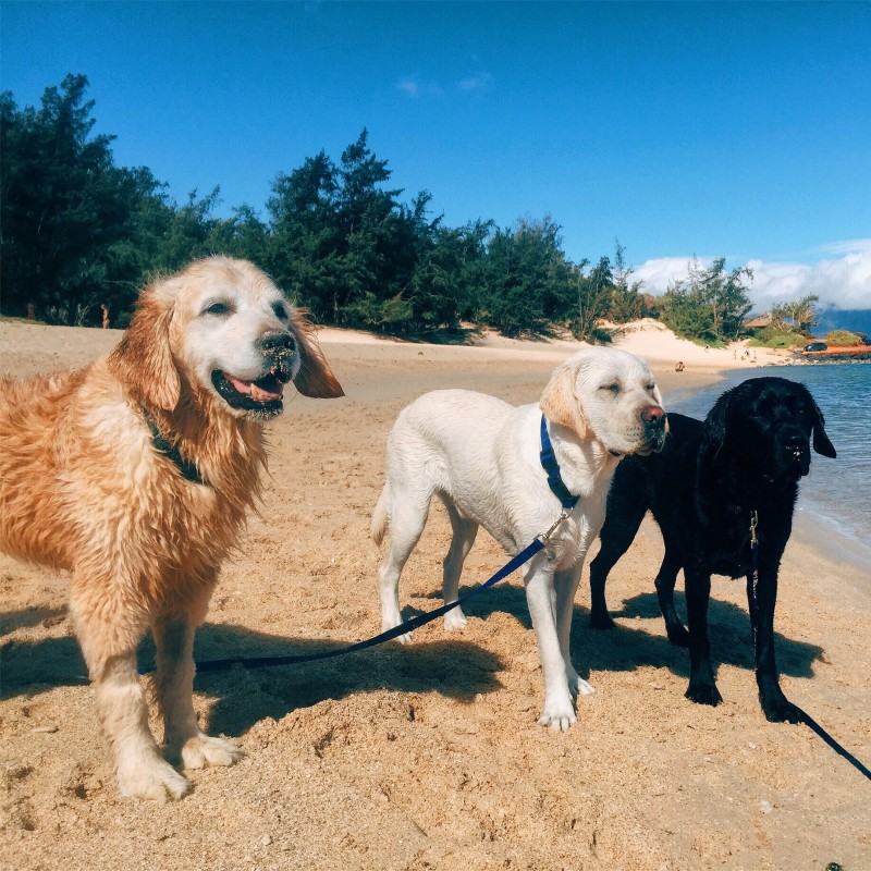 Pictured (from left to right): Ford, Wrangler, and Wesley during a trip to Spreckelsville Beach in Paia!